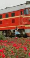 19岁少女在广东佛山花海自拍 不幸被火车撞亡